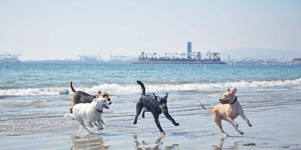 VC_8GreatCaliforniaDogBeaches_Rosies_PascalShirley_C0A0231_1280x640