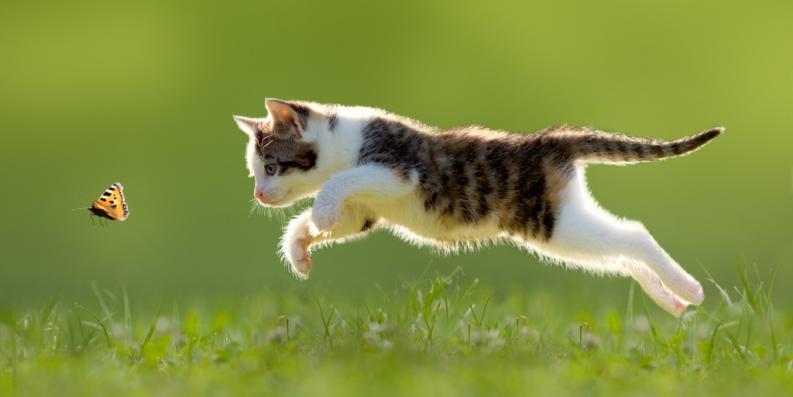 gato_saltando